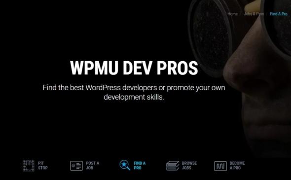best wordpress developers